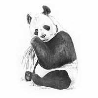 Sketch Art Mini - Panda